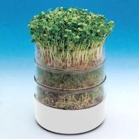 Биосет – проращиватель для зерен и семян